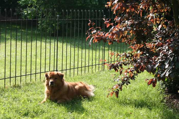 W Drab Alt Wiener Gusswaren Bilder Zum Gartenzaun